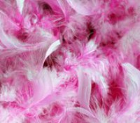 http://www.ccop.nl/wp-content/uploads/2015/08/pink-feathers-200x175.jpg